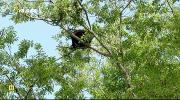 NG: Национальные парки Америки. Грейт-Смоки-Маунтинс (2015) HDTVRip от Kaztorrents