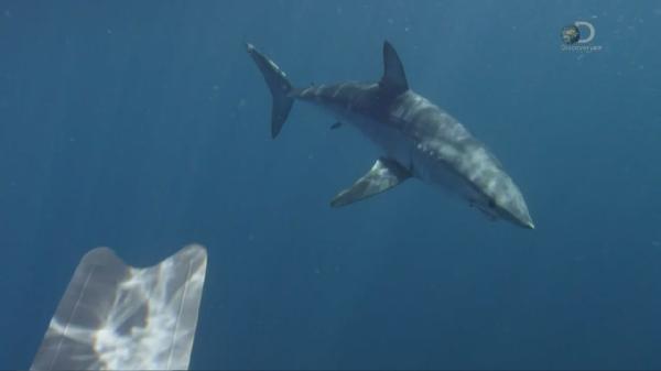 ������ ���� ������ ���� / Shark Week Monster Mako (2015)
