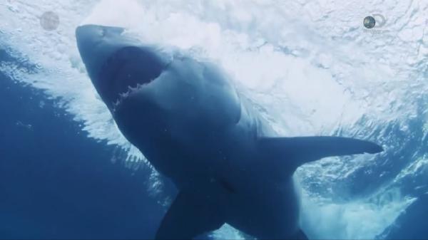 ������ ���������� ����� / Island of the Mega Shark (2015)