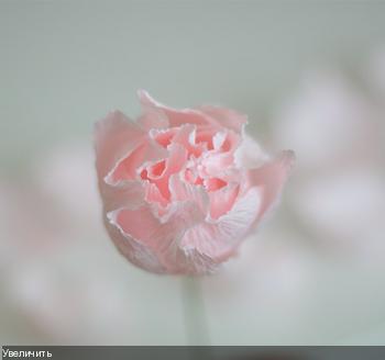 Цветы из гофрированой бумаги A71b342c96fc15f5236049ed32b8fd86