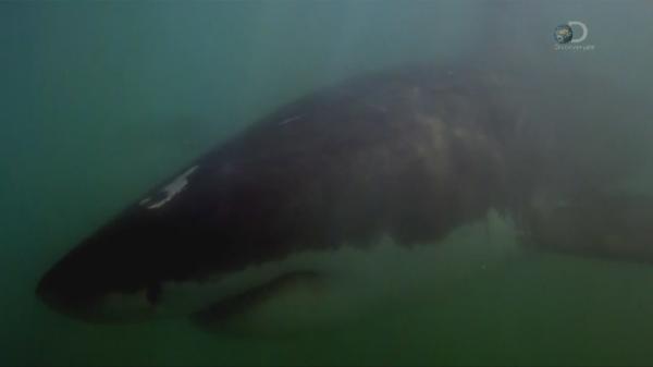 �������� �� ����� 2 / I Escaped Jaws 2 (2015)